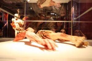 The Human Body - Muzeul Grigore Antipa