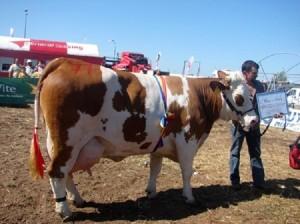 Foto: agricultura.arad-stiri.info
