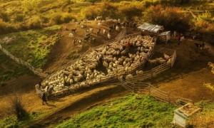 Sheepfold in Buzau county. Photograph: Auraș Mihaiu/GuardianWitness
